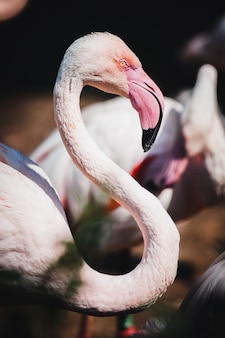 Close-up shot van een mooie flamingo