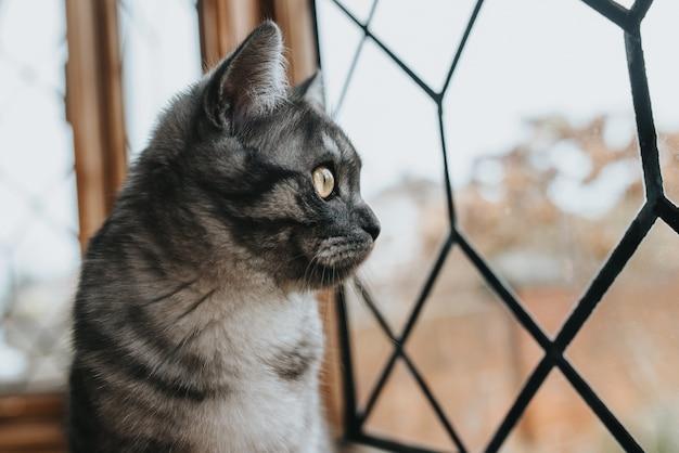 Close-up shot van een mooie kat met zwart en grijs patroon met gele ogen die uit het raam kijken