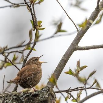 Close-up shot van een mooie mus zittend op een boomtak