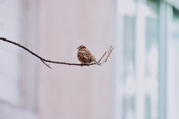 Close-up shot van een mus zittend op een boomtak