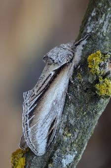 Close-up shot van een nachtvlinder op een boomstam in het bos