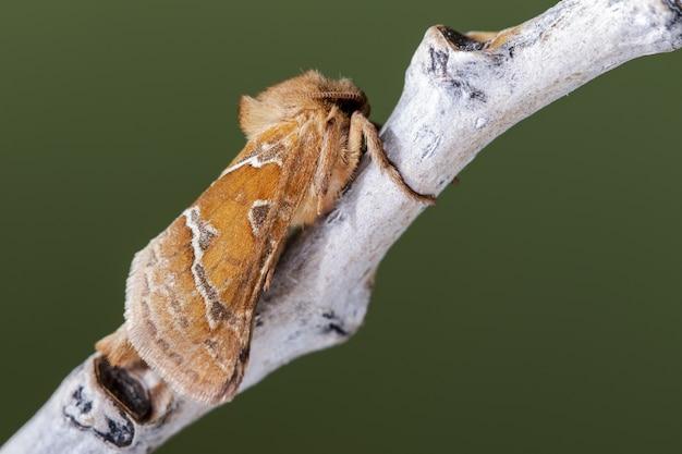 Close-up shot van een nachtvlinder op een plant in het bos