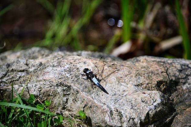 Close-up shot van een odonata op een grote rots