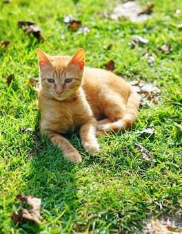 Close-up shot van een oranje kitten op het gras liggend op zijn kant op een zonnige dag