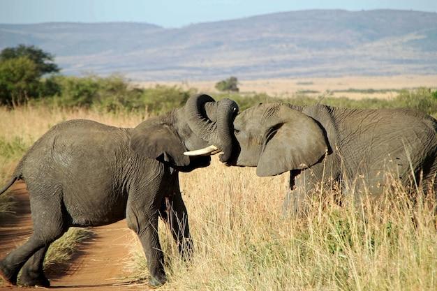 Close-up shot van een paar olifanten die elkaar knuffelen met de boomstammen