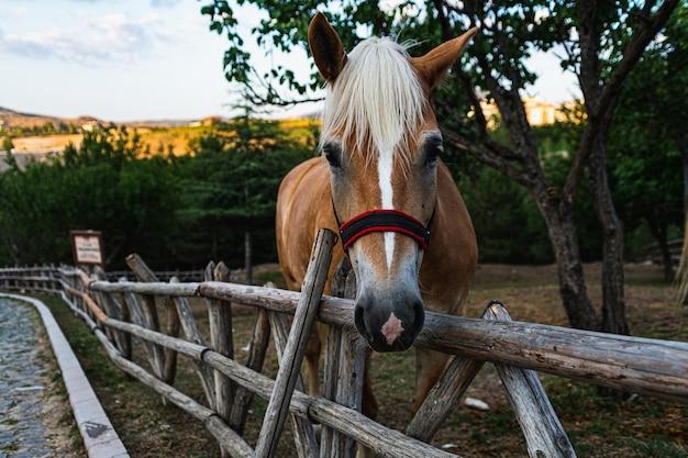 Close-up shot van een paard in omheinde landbouwgrond