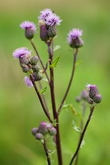 Close-up shot van een paarse en groene bloem overdag