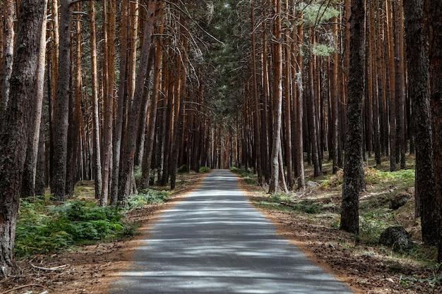 Close-up shot van een pad en boomstammen in een bos