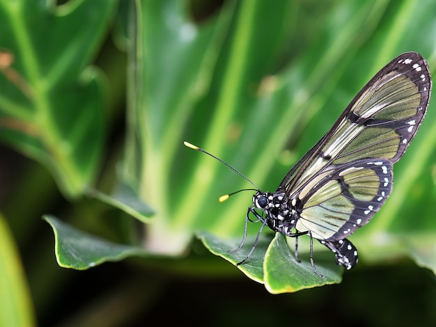 Close-up shot van een plaatsing op een groene plant