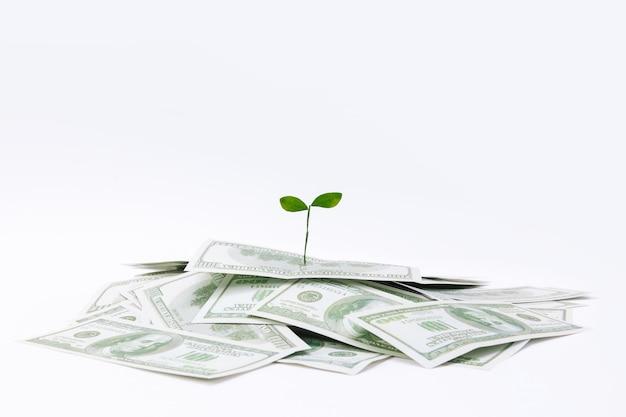 Close-up shot van een plant op dollarbankbiljetten - concept van investeringen