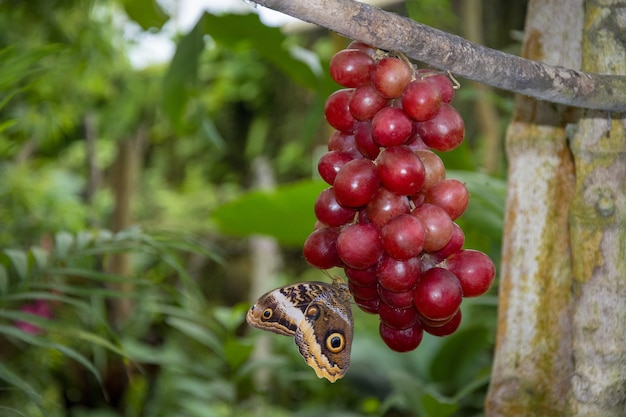Close-up shot van een prachtige bruine vlinder