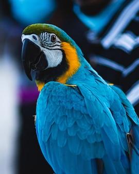Close-up shot van een prachtige kleurrijke scarlet macaw