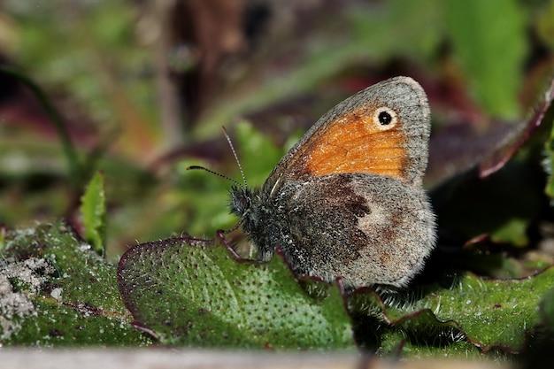 Close-up shot van een prachtige vlinder op de groene bladeren