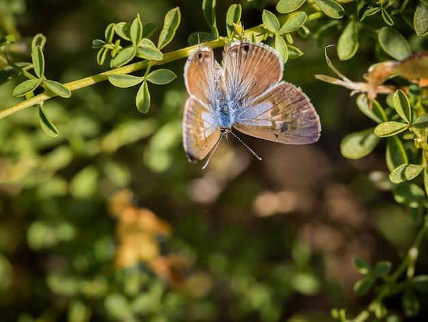 Close-up shot van een prachtige vlinder