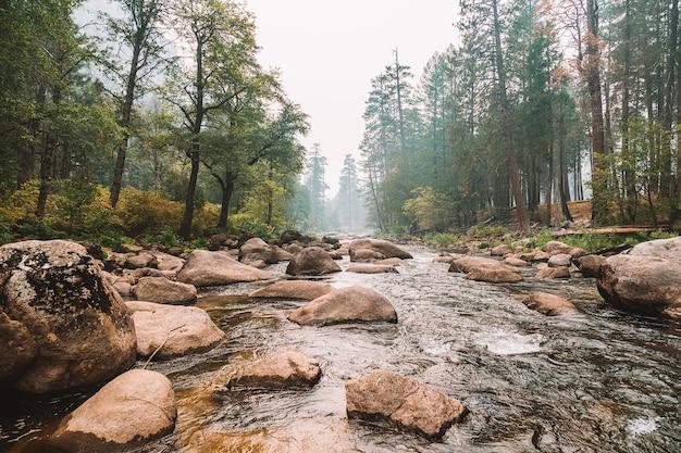Close-up shot van een rivier in een bos