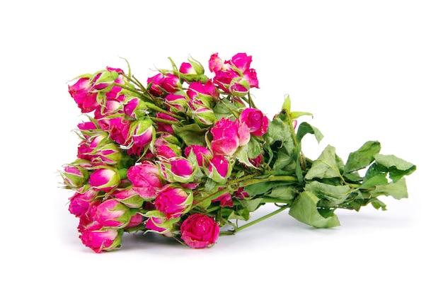 Close-up shot van een rode rozen