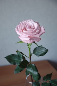 Close-up shot van een roze roos met grijze muur erin