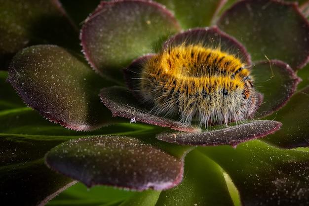 Close-up shot van een rups in zijn natuurlijke omgeving.