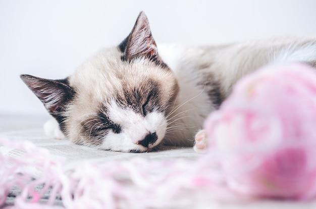 Close-up shot van een schattige bruine en witte kat slapen in de buurt van de roze bal van wol