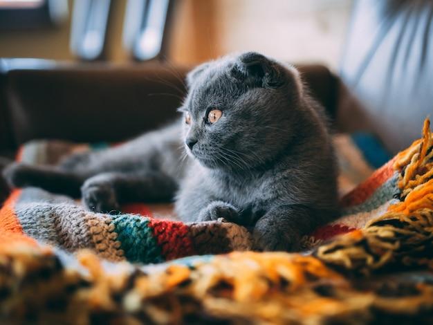 Close-up shot van een schattige grijze kat, zittend op een kleurrijke deken in de kamer overdag