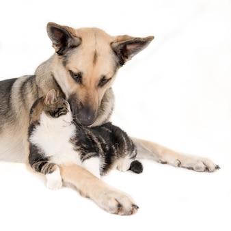 Close-up shot van een schattige hond die met een kat ligt en op wit wordt geïsoleerd