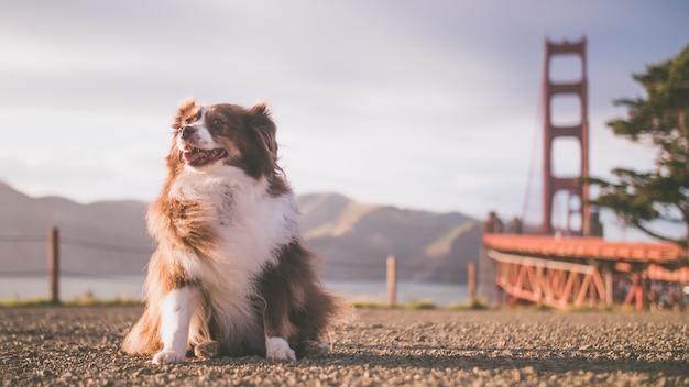 Close-up shot van een schattige hond zittend op de grond op een zonnige dag in de buurt van een meer en een brug