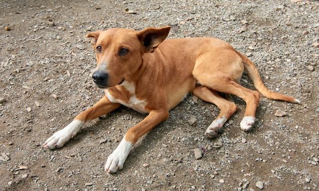 Close-up shot van een schattige huishond die op de grond ligt