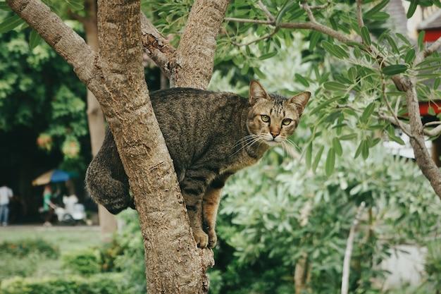 Close-up shot van een schattige kat, zittend op een boom in een park overdag