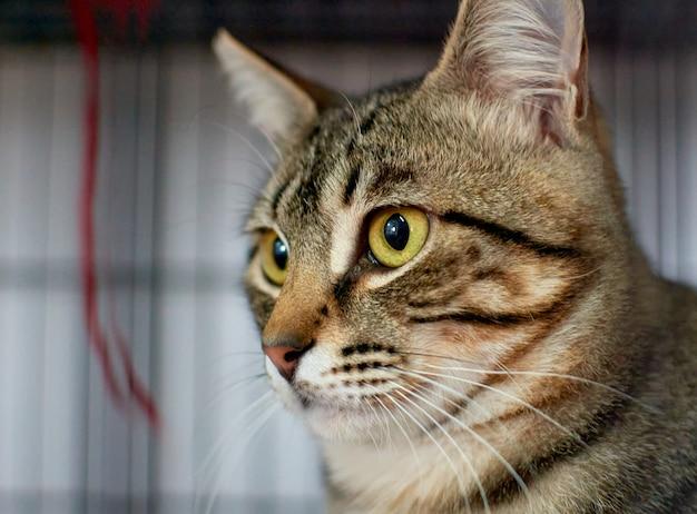 Close-up shot van een schattige pluizige kat die staart met zijn groene ogen