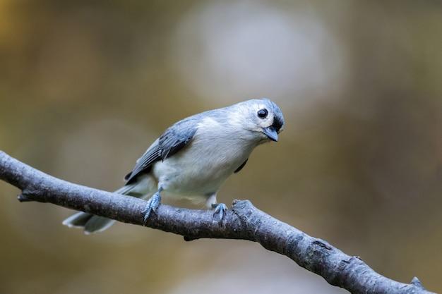 Close-up shot van een schattige vogel die op een tak zit
