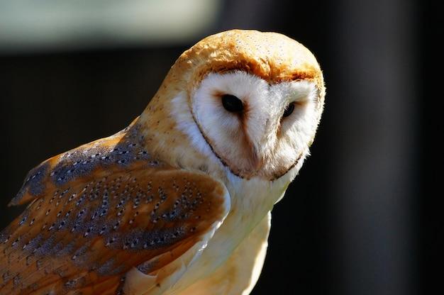 Close-up shot van een schattige witte en bruine uil op een onscherpe achtergrond