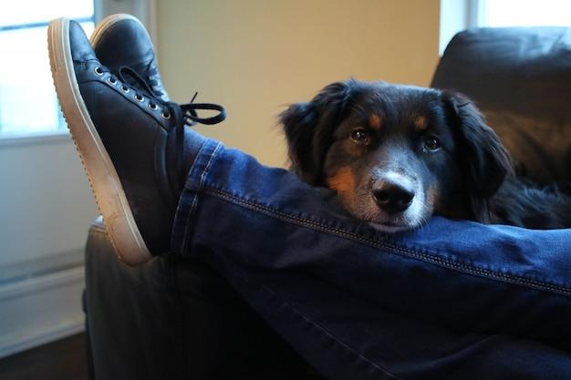 Close-up shot van een schattige zwarte hond zit achter het been van een man in spijkerbroek
