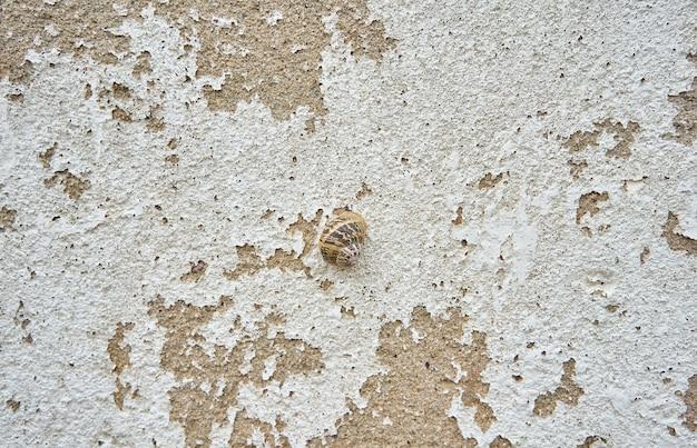 Close-up shot van een slak op een oude betonnen muur - perfect voor behang