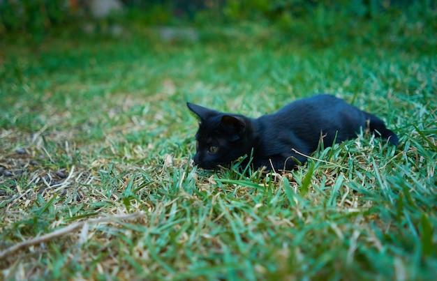 Close-up shot van een speelse zwarte kat op een groen gras in een tuin