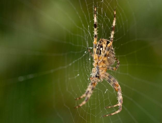 Close-up shot van een spin op een spinnenweb