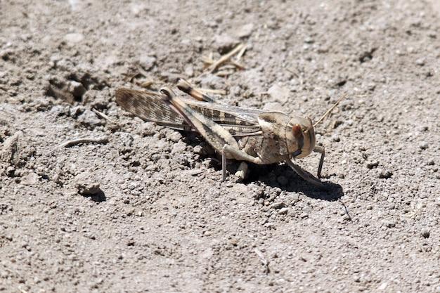 Close-up shot van een sprinkhaan op de grond