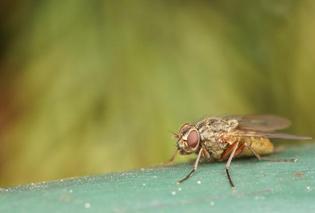 Close-up shot van een vlieg op een groen oppervlak