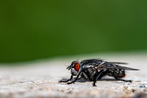 Close-up shot van een vlieg op het stenen oppervlak in het bos