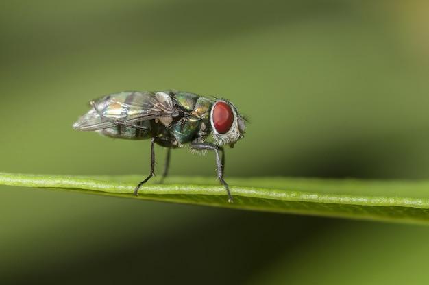 Close-up shot van een vlieg zittend op een blad met een groene onscherpe achtergrond