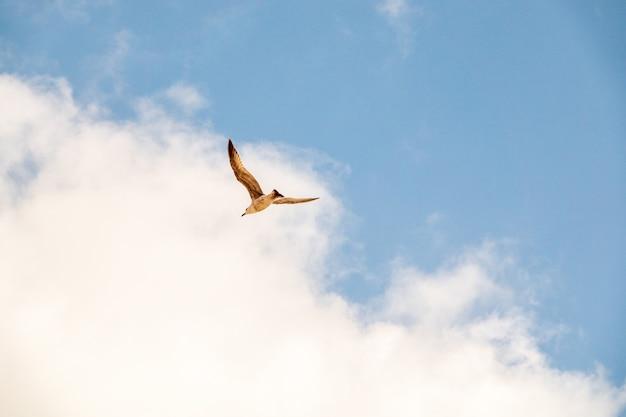 Close-up shot van een vliegende zeemeeuw over het water in de lucht