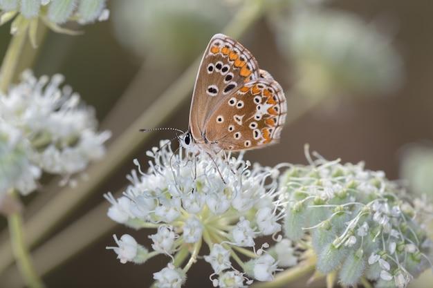 Close-up shot van een vlinder op een bloem in een bos