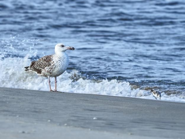 Close-up shot van een waadvogel op het strand
