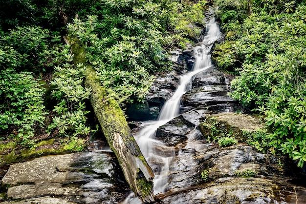Close-up shot van een waterstroom in het bos omgeven door groen