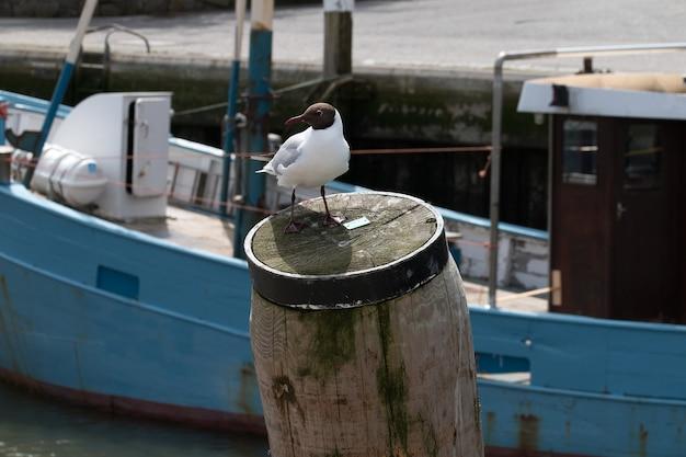 Close-up shot van een witte vogel achter een schip zittend op een stuk droog hout