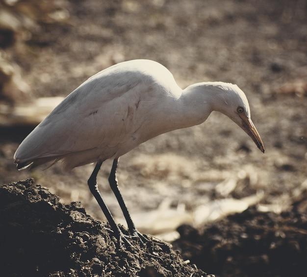 Close-up shot van een witte zeevogel op een rots met een onscherpe achtergrond