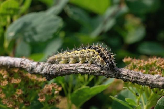 Close-up shot van een worm op een boomtak met een wazig
