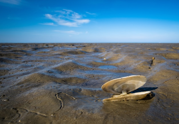Close-up shot van een zeeschelp op modder en een blauwe hemel
