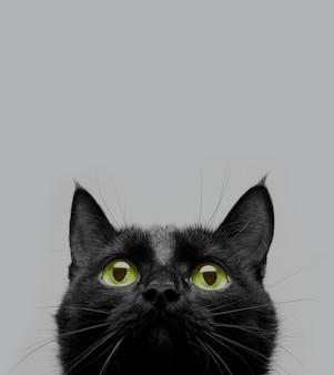 Close-up shot van een zwarte kat met groene ogen