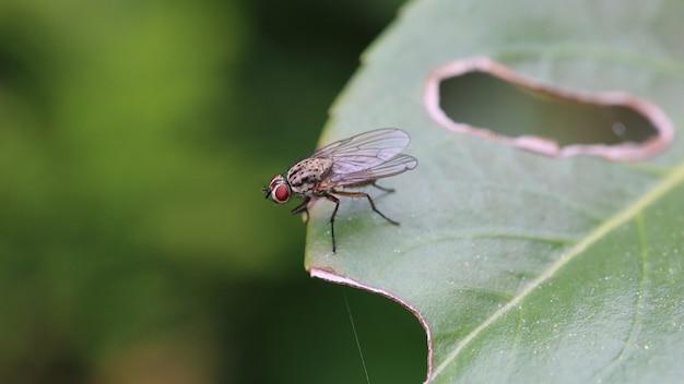 Close-up shot van een zwarte vlieg op een groen blad met een gat erin