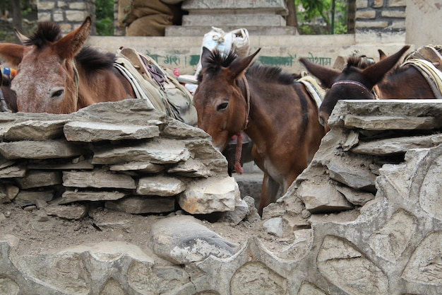 Close-up shot van ezels op de boerderij
